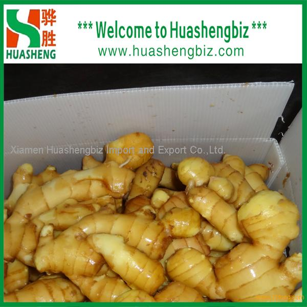 Chinese Top Quality Freshest Ginger From Origin