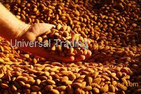 ALMOND NUTS for sells.