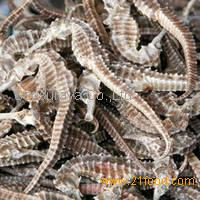 Dried Seahorse and Sea Cucumber