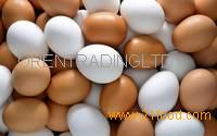 Fresh Chicken Brown & White Table Eggs