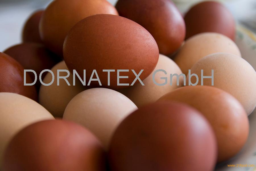 sell EGGS FROM THE BIGGEST PRODUCER AND EXPORTER COMPANY OF TURKEY