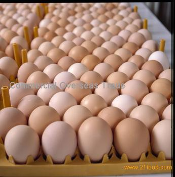 Fresh Laid Organic Table Eggs. 30% Discount sale now