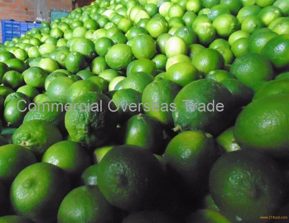 Fresh Green Seedless Lime now available on sale. 30% Discount