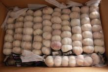 New Crop Fresh Chinese Normal White Garlic (5.0cm, 5.5cm, 6.0cm) Mesh Bag Or Box Packing