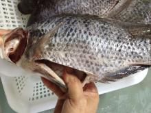 Tilapia fish gutted and scaled, fresh frozen,high quality guaranteed