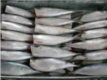 mackerel HG,HGT
