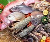 Fish & Seafood,Surimi,Shrimp,Shellfish,Seaweed,Roe Sea Cucumber,Mollusks,Crab for sale now