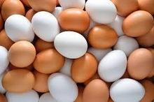 High Fresh Table Eggs Brown And White for Sale