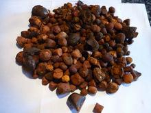 OX GALLSTONES BEST PRICE