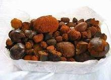 80/20 Cow/ox/cattle Gallstones