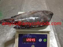 Frozen Tilapia fish top fresh