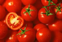 2015 New crop fresh tomato