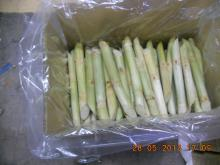 Frozen sugar cane from Vietnam