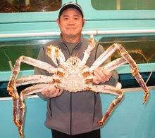 Live King Crabs / Frozen King Crab Legs