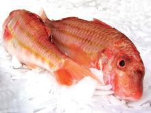 Fresh and Frozen Red Mullet