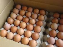 Chicken Eggs 63-72 grams of each L Size
