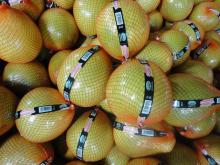Chinese sweet honey pomelo