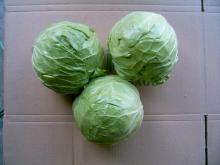 Fresh sweet cabbage