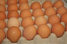 Brown chicken eggs (competitive price)