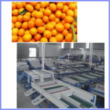 citrus orange grading machine,Peach grading machine