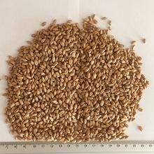 Best Quality Milling Wheat