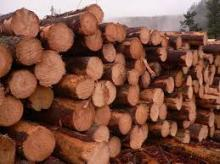 radiata pine chip logs