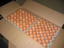2015 WHITE EGGS, BROWN FRESH EGGS/ CHICKEN / FILLET !!! Top Supplier !!!