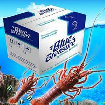 Fish tank aquarium sea salt live lobster