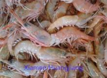 Red Shrimp HOSO