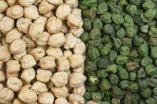 Kabuli CHICKPEAS for sale.