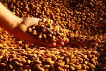 Sweet ALMOND NUTS for sells