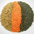 Organic Lentils (Green/Red/Black/Brown/Split) New Crop 2016