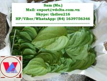 Betel Leaves - HP/Viber/WA: (84) 1639756346