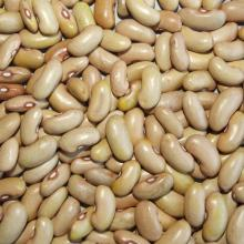 YELLOW KIDNEY BEANS LONG SHAPE
