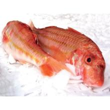 Frozen Red Mullet & Red Snapper