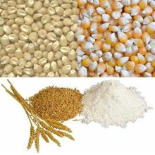 Quality Grains Maize, Barley, Buckwheat, Wheat, Rice for Sale