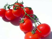 Fresh Red Cherry Tomatoes for sale
