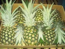 HIGH QUALITY FRESH PINEAPPLE