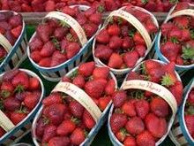Best Quality Fresh Strawberry