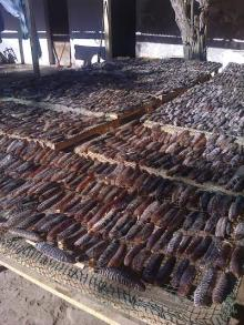 We sell Dried Sea Cucumbers 3 to 12 inches sizes (Black, Sandy, Spiny varieties)