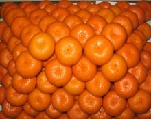 Fresh South Africa Orange/Fresh Shatang Orange fruit