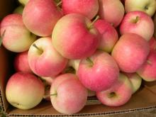 Fresh New Crop Jiguan Apple