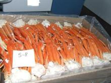 Live snow crab well packed