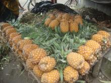 Fresh pineapple from Thailand
