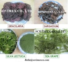 OFFER OF SEAWEED VIET NAM