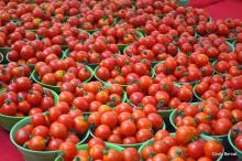 Fresh Red FarmTomatoes