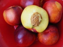 Fresh Nectarine Fruits for sale