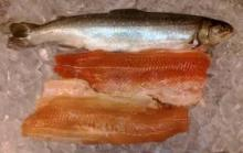 Arctic Char (Trout) fillets