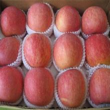 Fresh Apple Fruit for Sale, Wholesale Fruit and Vegetable Prices