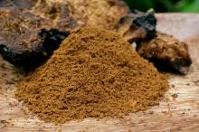 Best Chaga Available For Sale & Export